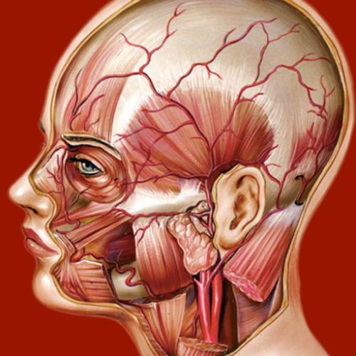 Atlante di Anatomia è un app indispensabile per chiunque eserciti o studi professioni sanitarie.